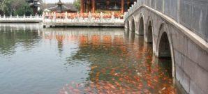 Doğu'nun İncisi: Şanghay 1
