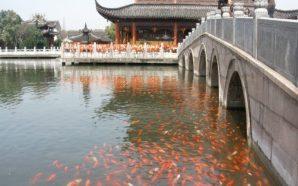Doğu'nun İncisi: Şanghay