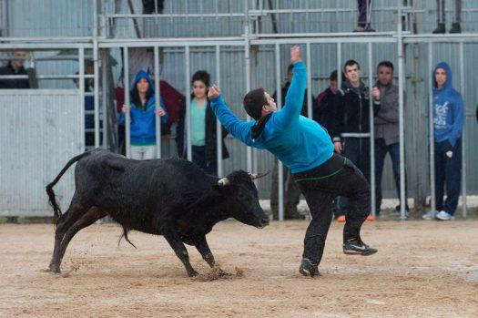 Festes amb bous a Mas de Barberans (Tarragona)