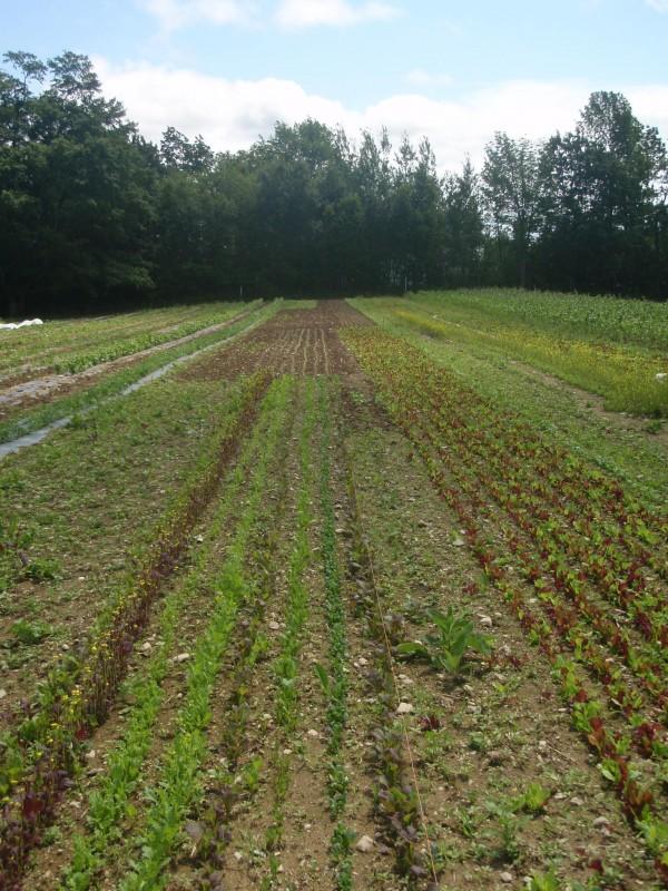 Fields on an organic farm