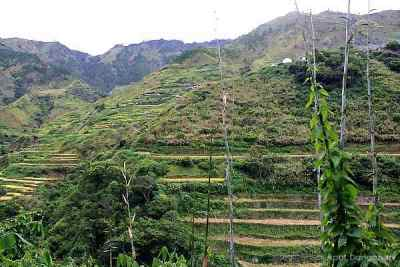 Buscalan rice terraces