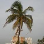 Palm Tree Wind
