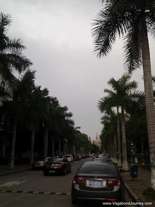Palm trees line the streets