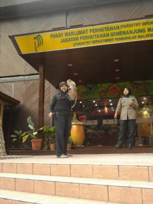 Bukit Nanas Monkey Kuala Lumpur