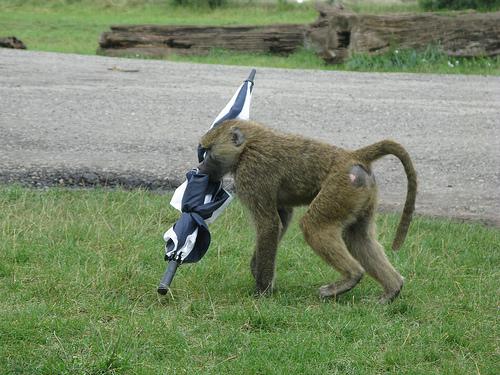 funny safari cc image courtesy of Karim Rezk on Flickr
