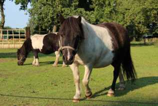 Vakantiehuis Dwingeloo Paardenvakantie (13)-s