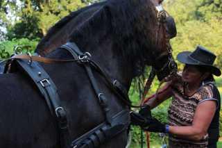 Vakantiehuis Dwingeloo Paardenvakantie (15)-s