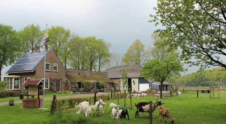 Ieder jaar zijn er weer jonge geiten op de hobbyboerderij van Henk en Ria.