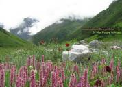 Valley of Flowers Gallery