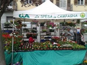 Spesa in Campagna Susa_1
