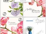 Retrospectiva flores-destaque