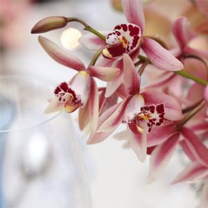 Flor da Semana 300px