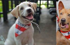 Rescue Me: Dog Adoption in Singapore