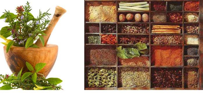 Fut_Medicinal-Herbs
