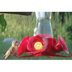 Small Crop Of When To Stop Feeding Hummingbirds