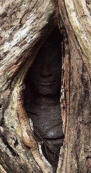 Ta Prohm Hidden Apsara