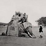 Delhi, His Eminence, The Viceroy's Elephant, Delhi Durbar Bourne & Shepherd, 1877 Courtesy MAP / Tasveer