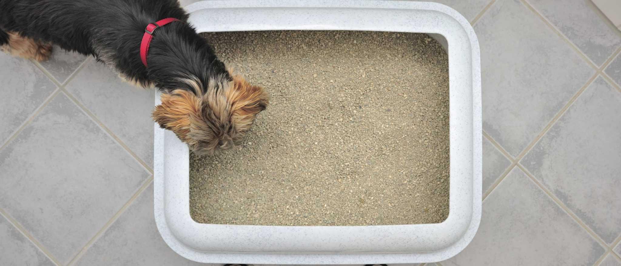 Fullsize Of Why Do Dogs Eat Cat Poop