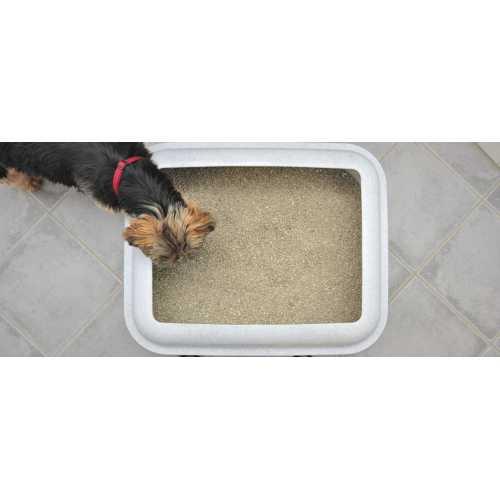 Medium Crop Of Why Do Dogs Eat Cat Poop