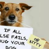 stress benefits of pets