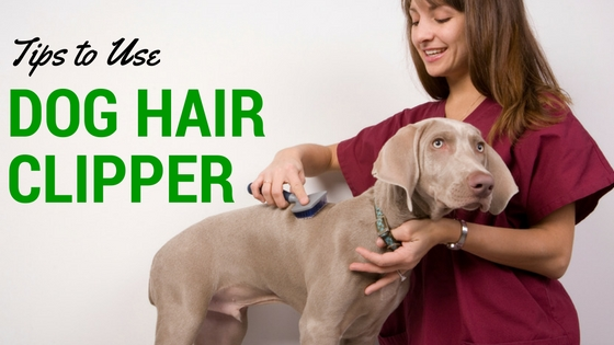 How to use Dog Clippers like a Pro