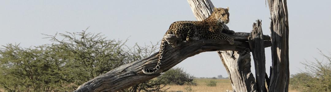 Web Botswana
