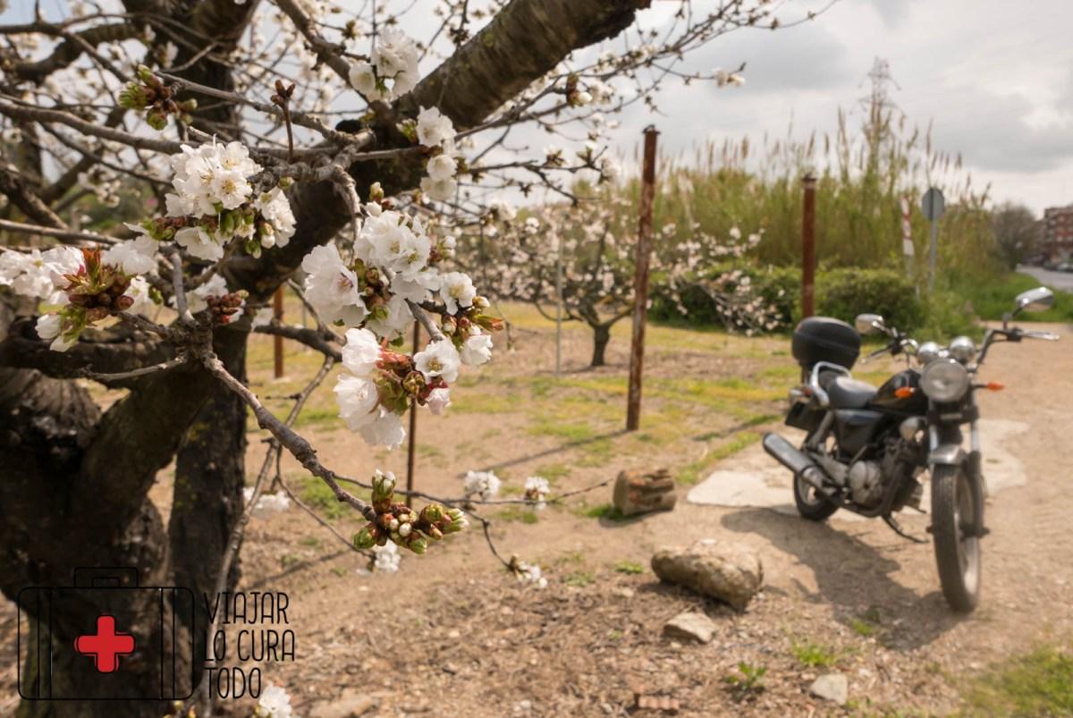 Cerezos en flor cerca de Barcelona