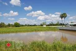 En los arrozales