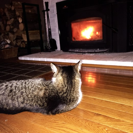 Robert hangs out by the fire like a boss in the Berkshires