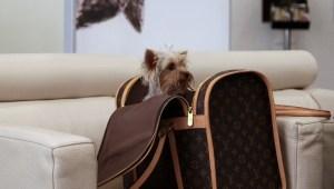 animaux et luxe