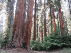 sequoia_cluster