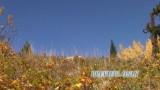Free Autumn Worship Motion Background