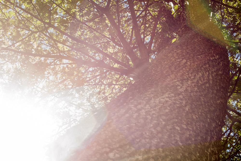 Natural Light Inspiration-9