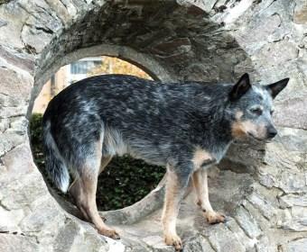 Foto eines Hundes, stehend in einem Mauerloch