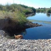 La guarderia del Consorci riu Millars recorda la prohibició de dur gossos solts pels llocs més sensibles del paratge