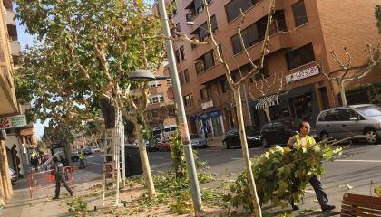 SPV escomet la poda de l'arbrat urbà que arribarà avials d'alineació i parcs i jardins de tota la ciutat
