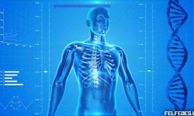 cuerpo-humano-850x478