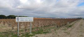 Wine Up en Vega Sicilia 20151127_131251_23299107231_o