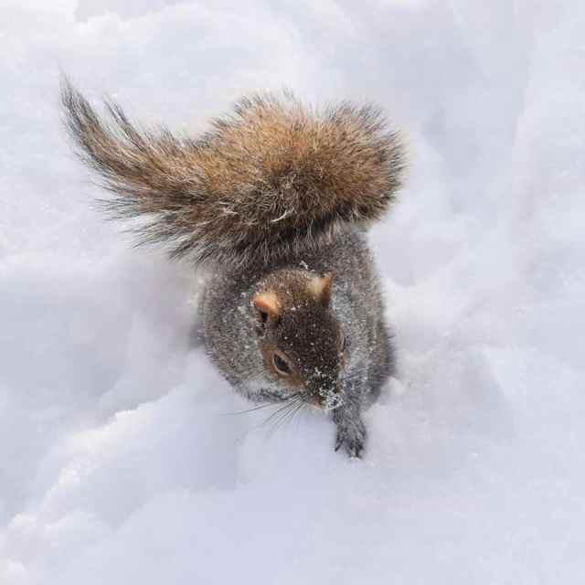 Model Squirrel