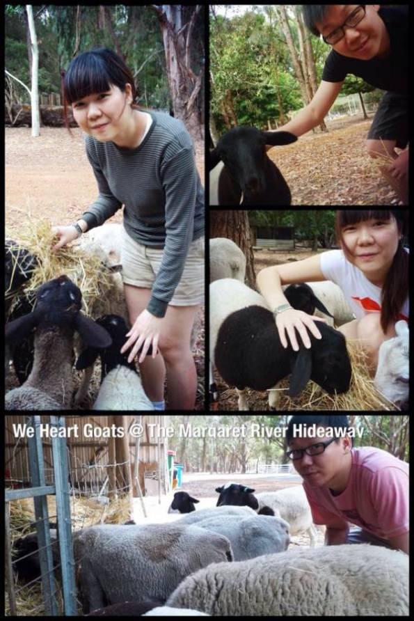 02-goats