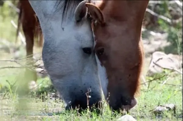 02-wild-horse-rescue