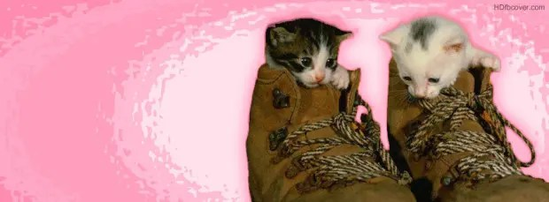 kittens-in-shoes-facebook-cover