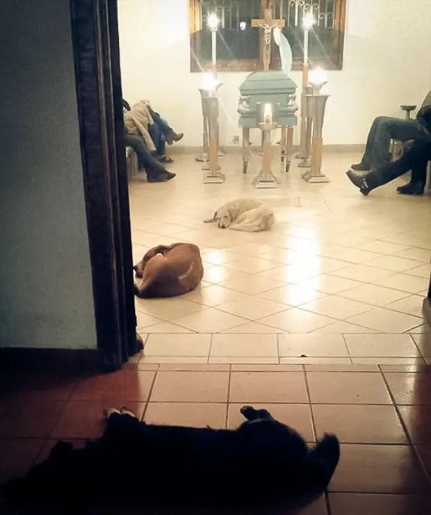 perros-callejeros-funeral-margarita-suarez-mexico-2