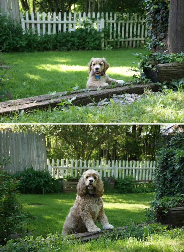 dogs-before-and-after-31__880 (1)