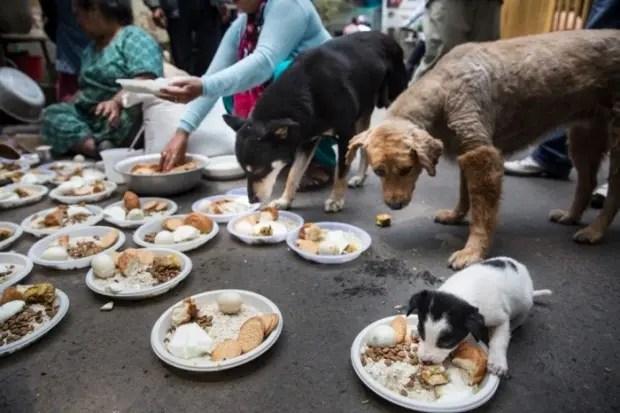 mujer-ayuda-perros-nepal-terremoto-comida