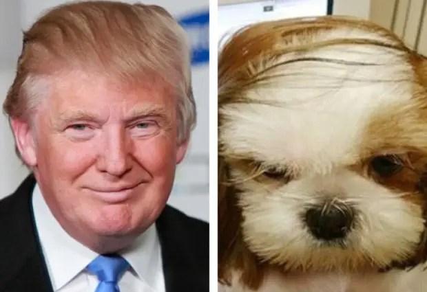 Perro-trump