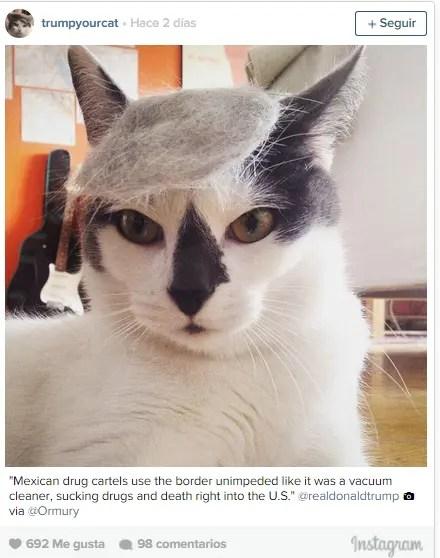 Trumpcat--