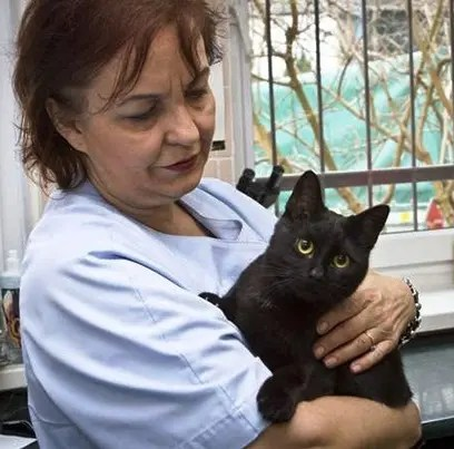 gato-negro-enfermero-refugio