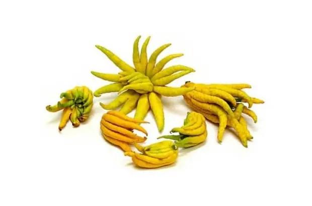 weird-fruits-vegetables-1__700