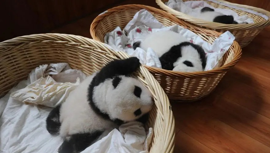 panditas-bebes-en-canastas-16